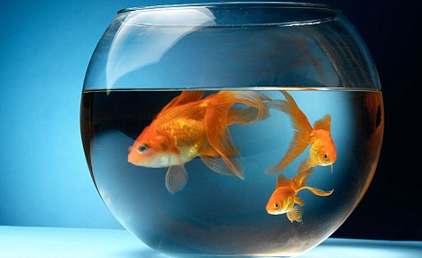 The Narcissist's Fishbowl vs. Inner Peace